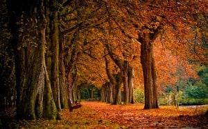 autumn season change